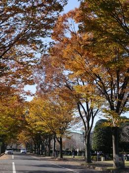 autumn_01.jpg