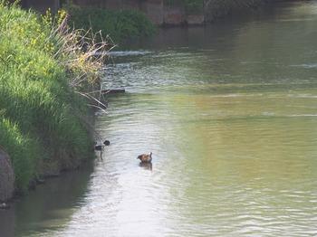 river2015_02.jpg